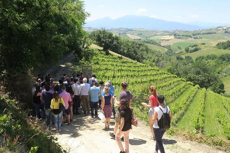 Language and culture courses in Le Marche